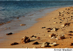 Dead corals litter a beach in Bolinao, Philippines