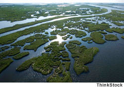 Aerial view of wetlands in Louisiana's Mississippi River Delta, which are now threatened by sea level rise
