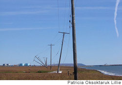 Unstable permafrost causes telephone poles to collapse along the coastline near Nome, Alaska