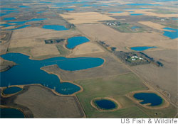 Prairie pothole wetland region in peril from rising temperatures.