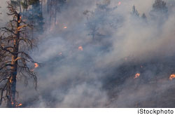 High temperatures and thawing permafrost are probably contributing to more forest fires in western Siberia